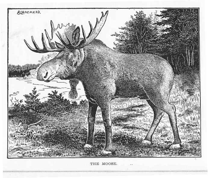ifg_1898_moose report of the maine commissioners of inland fish & game, 1898 Biggest Moose in Maine at edmiracle.co